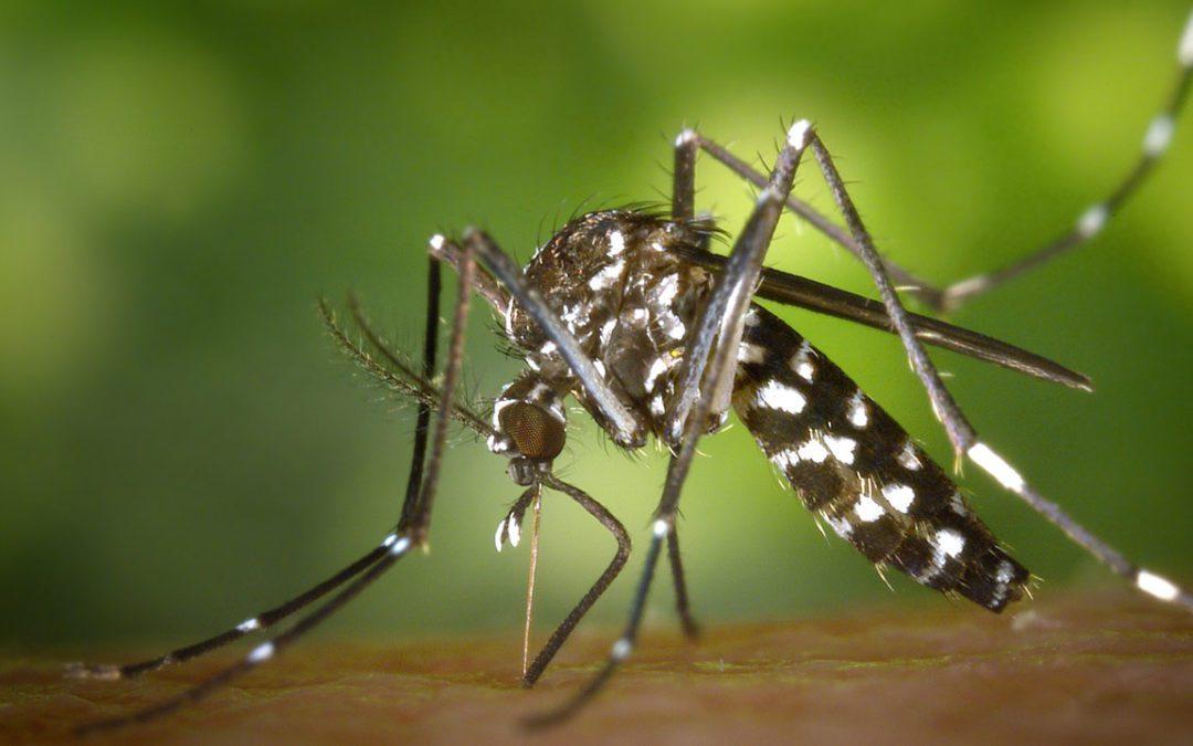 Lutte contre le moustique-tigre