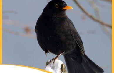 Week-end national de comptage des oiseaux des jardins : le 30 et 31 janvier 2021